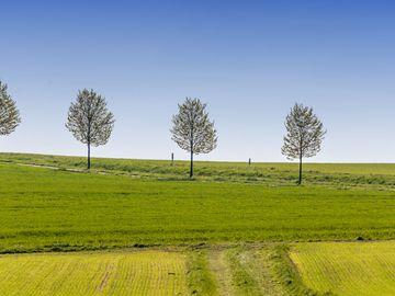 Das Bild zeigt eine Landschaft im Hunsrück. Hinter einem Feld befinden sich mehrere Bäume, die in einer Reihe angeordnet sind.